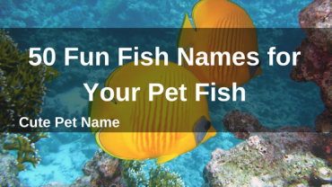 50 Fun Fish Names for Your Pet Fish