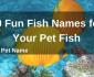 50 Fun Fish Names for Your Pet Fish