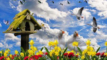 birds bird names