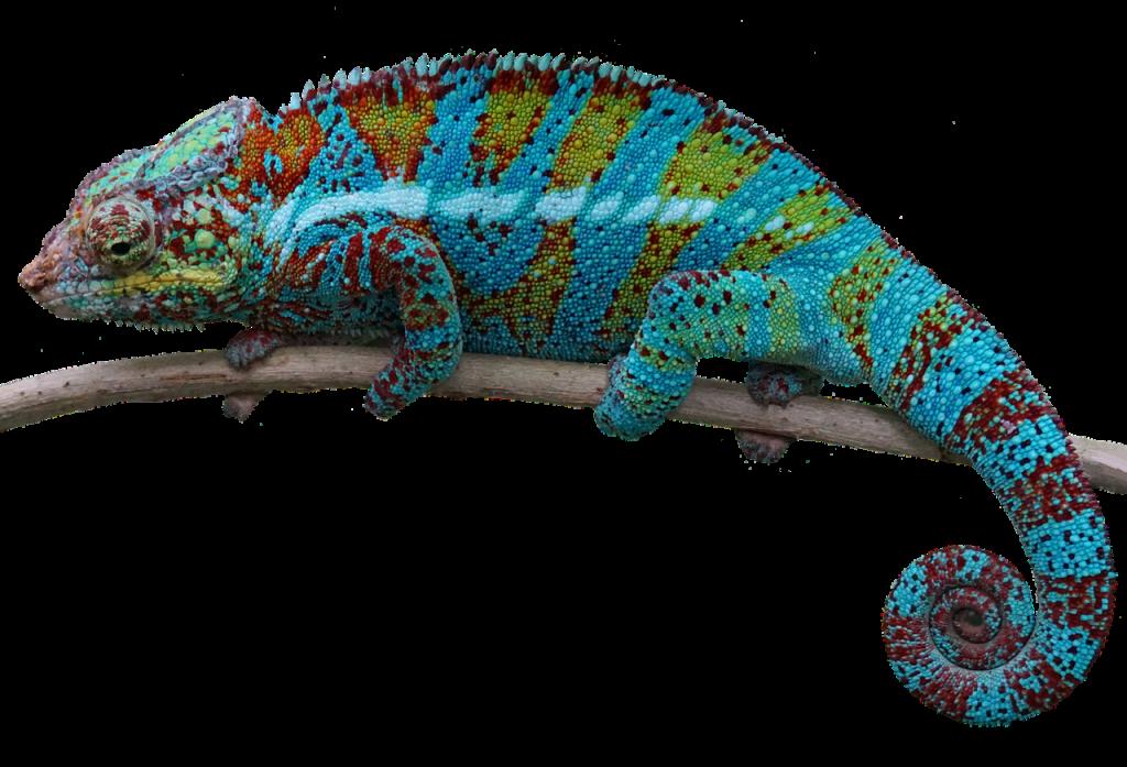 50 Lizard Names for Pet Geckos, Iguanas, Chameleons, or Dragons