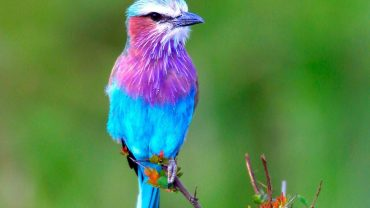Cool-Bird-feat-img