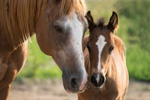 funny horse names 5