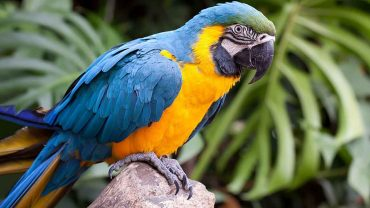 blue parrot resting on a branch
