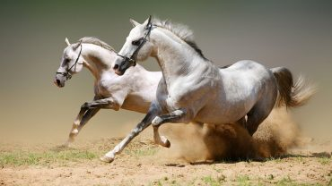 50-horses-names-feat-img