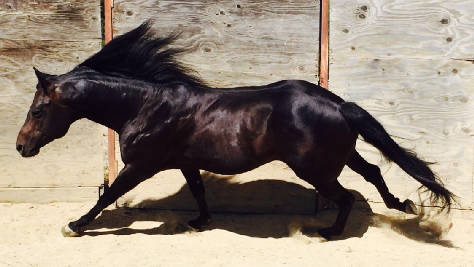 fast horse img