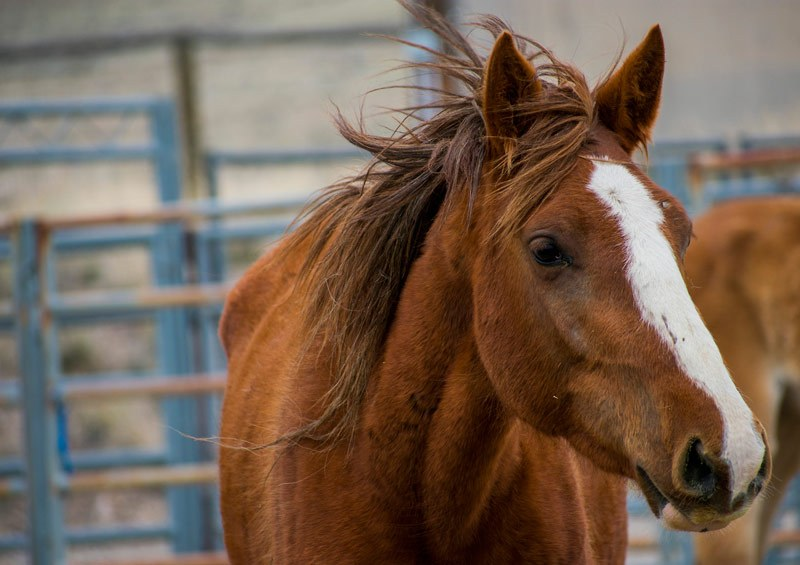 a strong brown horse with white stripe on face which suits any famous horse