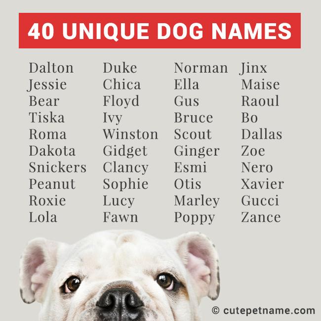 40 Unique Dog Names