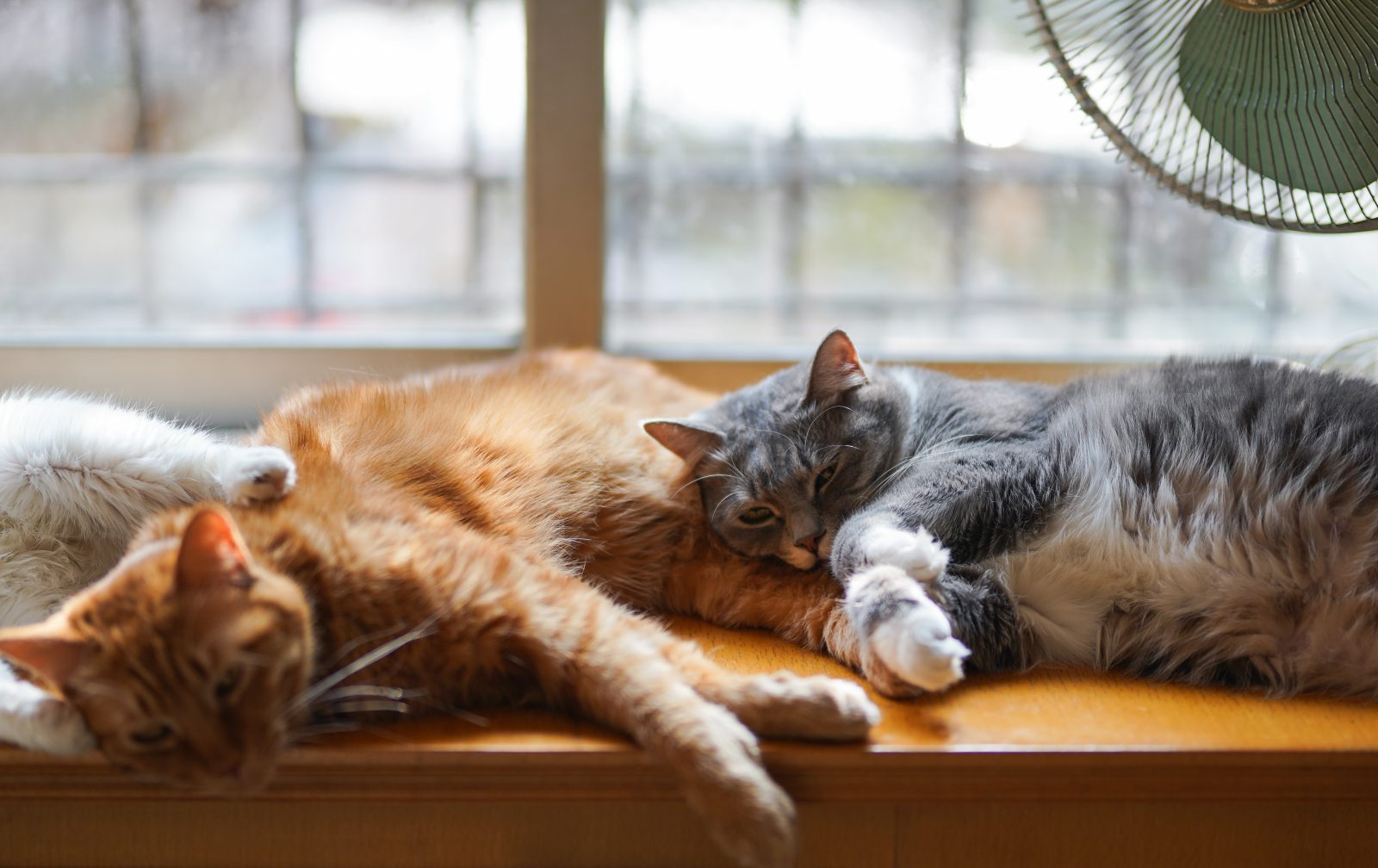 adorable cats sleeping together on top of the table
