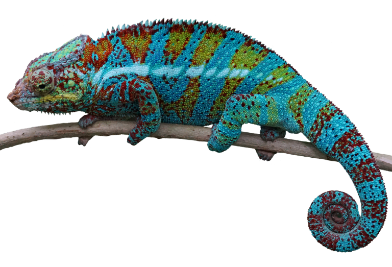 50 Lizard Names for Pet Geckos, Iguanas, Chameleons, or Dragons