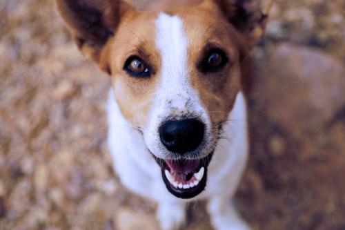 dog's happiness