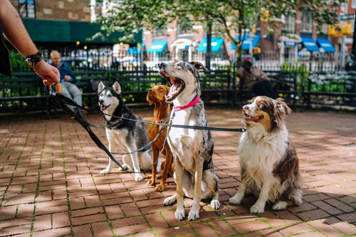 four dogs sitting at the park